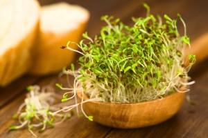 alfalfa-uses