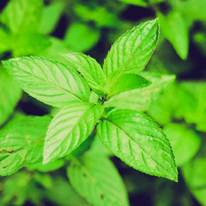 peppermint-blog