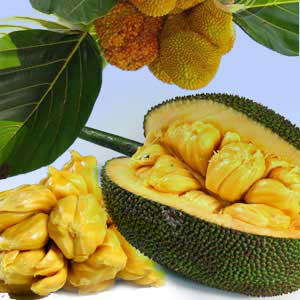 Brazilian Jackfruit Fragrance Oil