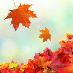 Awesome Autumn Scents: Fresh Fallen Leaves Fragrance Oil