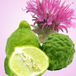 Top Exotic Fragrances: Gingered Bergamot Fragrance Oil