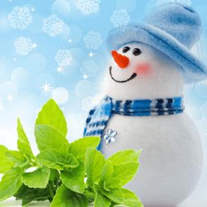 Fragrance Oils for Winter: Jack Frost Fragrance Oil