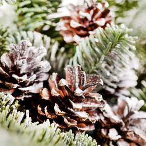 Frosted Pinecones Fragrance Oil