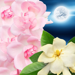 Moonlit Path Fragrance Oil