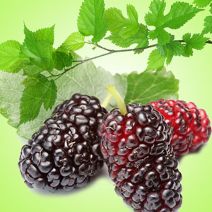 Berry Fragrance Oils: Mulberry Fragrance Oil