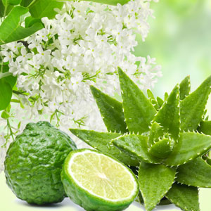 Scents of Spring: NG Aloe & White Lilac Fragrance Oil