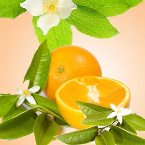 Aromatherapy Fragrance Oils: Orange Blossom Fragrance Oil