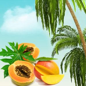 Papaya Guava Mango Fragrance Oil