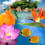 Top Exotic Fragrances: Paradise Reef Fragrance Oil