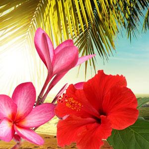 Hawaiian Sea Mist Fragrance Oil