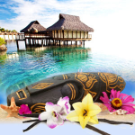 Top Exotic Fragrances: Tahitian Vanilla Fragrance Oil