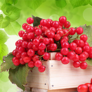 Teaberry Fragrance Oil