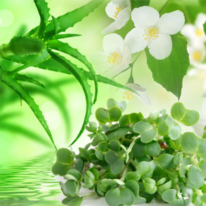 Scents of Spring: Watercress and Aloe Fragrance Oil