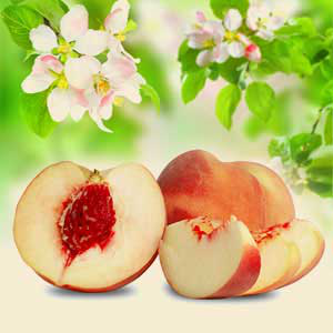 Peach Fragrance Oils for DIY Crafts: White Peach and Silk Blossoms Fragrance Oil