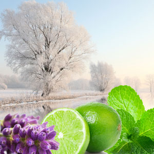 Winter Garden Fragrance Oil