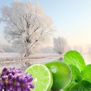 Winter Garden Fragrance Oil