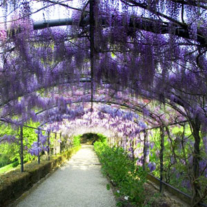 Scents of Spring: Wisteria Blvd Fragrance Oil