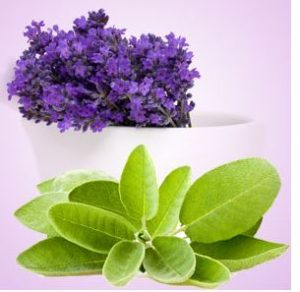 Aromatherapy Fragrance Oils: Lavender Sage Fragrance Oil