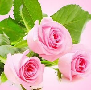 Best Floral Fragrance Oils Fresh Cut Roses Fragrance Oill