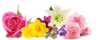 Best Floral Fragrance Oils