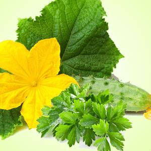 Best Fragrance Oils For Soap Cucumber Wasabi Fragrance Oil