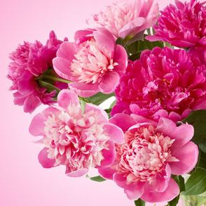Best Floral Fragrance Oils Peony Fragrance Oil