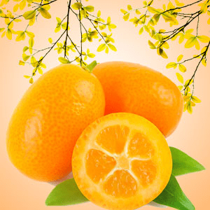 Strong Citrus Fragrance Oils Kumquat Fragrance Oil