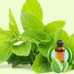 What Can I Use to Flavor Lip Balm: Peppermint Essential Oil
