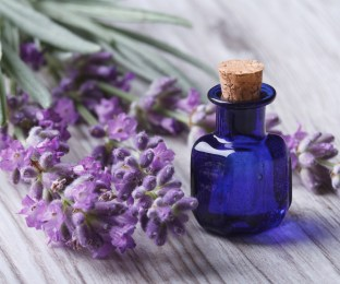 Best Lavender Fragrance Oils