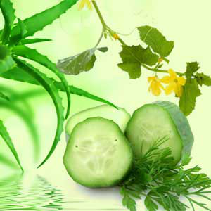 Fragrance Oils for Saint Patricks Day: Aloe Vera & Cucumber Fragrance Oil