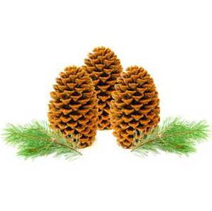 Craft Ideas for Fall Pinecone Firestarters Recipe