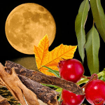 Awesome Autumn Scents: Harvest Moon Fragrance Oil