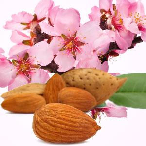 Almond Body Cream Recipe