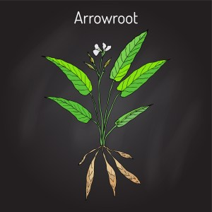 14 Ways to Use Arrowroot Powder: How It's Made