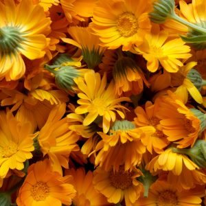 Calendula Skin Care Recipes