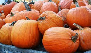 Pumpkin Bath Melts Recipe: A little Bit of Pumpkin History