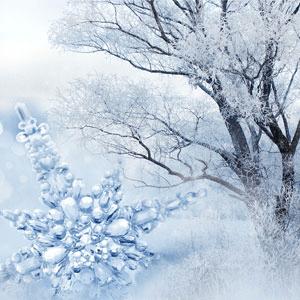 Fragrance Oils for Winter: Frost & Snowdrops Fragrance Oil
