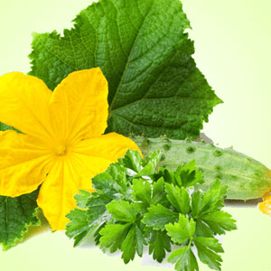 St Patrick's Day Activities for Adults: Cucumber Wasabi Cilantro Fragrance Oil