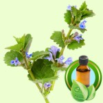 Corn Mint Essential Oil