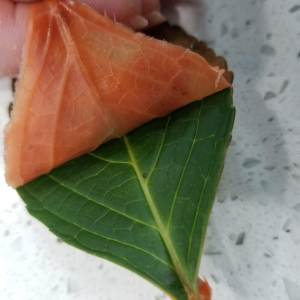Removing the Soap from the Leaves