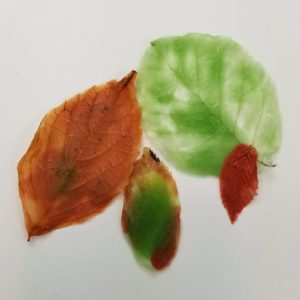 Ways to Decorate your Home with These Leaves