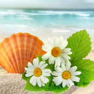 20 Floral Scents for Spring - Beach Daisies Fragrance Oil