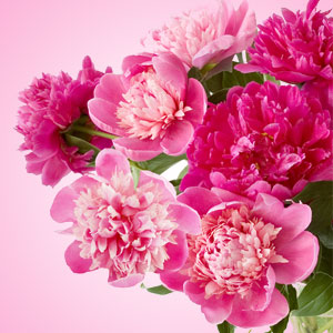 20 Floral Scents for Spring - Peony Fragrance Oil