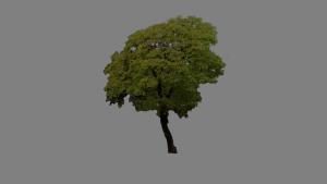 Wood04.x