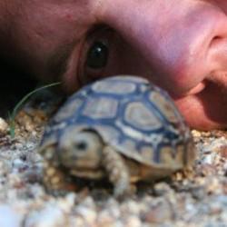Tortoise Baby