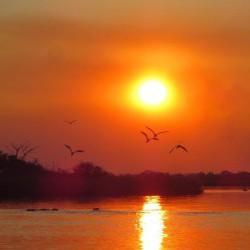 skimmer & hippo sunset small