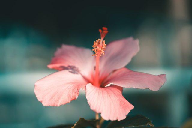 ส่วนประกอบของดอกไม้, โครงสร้างของดอกไม้, การสืบพันธุ์ของพืชดอก, การปฏสนธิของพืช, ดอกไม้