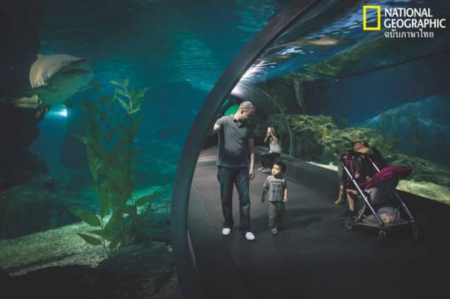 ฉลาม, พิพิธภัณฑ์สัตว์น้ำ