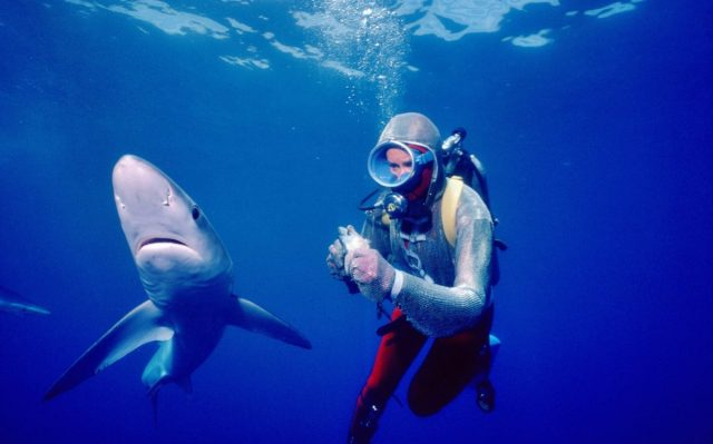 playing with shark
