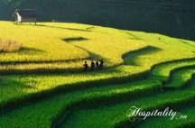 Ruong Bac Thang - Gao Sach Viet Nam - Gian Hang San Pham Tot -- 02